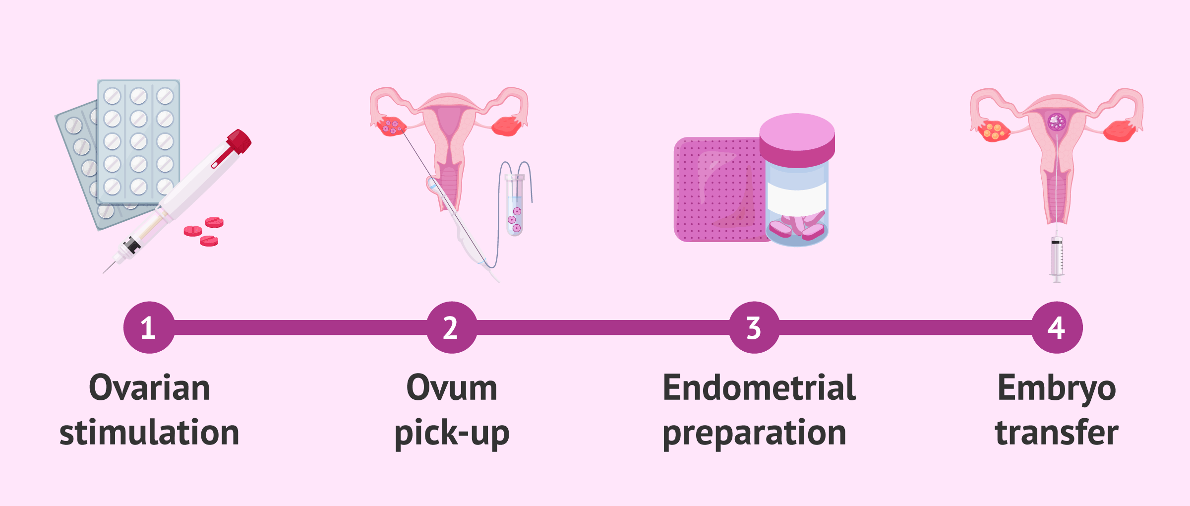 Imagen: Stages of <a href='https://www.51rry.com/page/1613/' title='IVF'>IVF</a> until embryo transfer